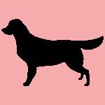 hund10p