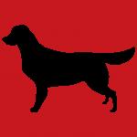 hund10r