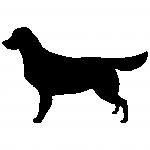 hund10w