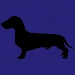 hund11m