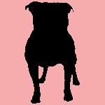 hund1p
