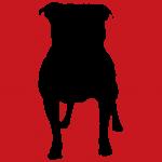 hund1r