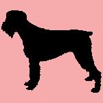 hund3p