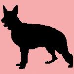 hund4p