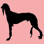 hund5p