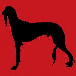 hund5r
