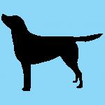 hund7bl