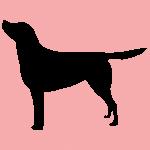 hund7p