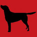hund7r