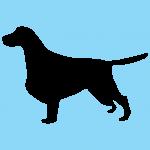 hund8bl