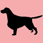 hund8p
