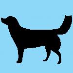 hund9bl