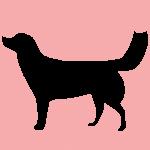 hund9p