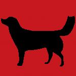 hund9r