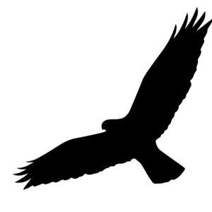Fågelsiluetter
